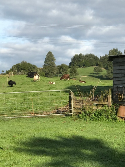 The cows! We counted 3 babies.